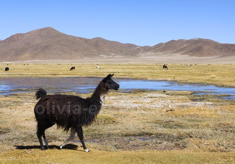 Chaquilla, entre Potosi et Uyuni