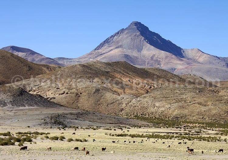 Cerro Chorolque