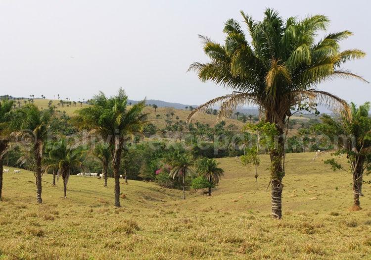 Paysage de la région de Santa Cruz, Bolivie