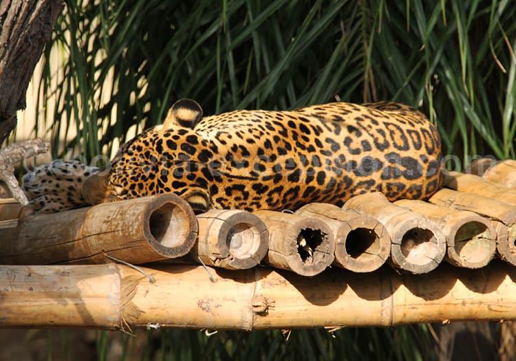 Jardin zoologique, Santa Cruz de La Sierra
