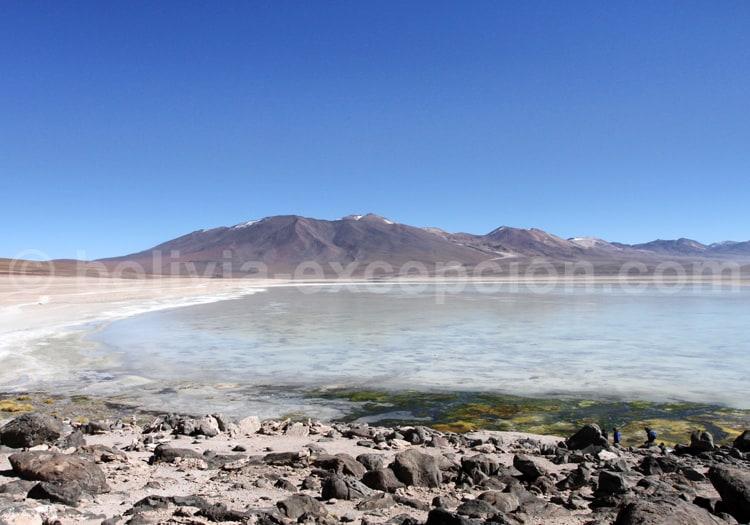Laguna Blanca, Lipez