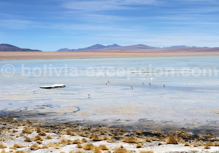 Laguna Chalviri