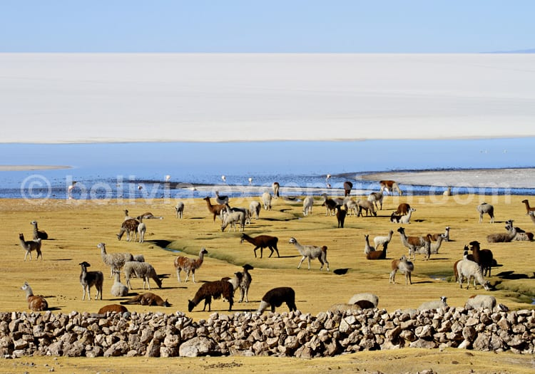 Le paradis terrestre se situe à Uyuni