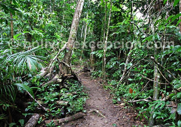 Randonnée en Amazonie bolivienne