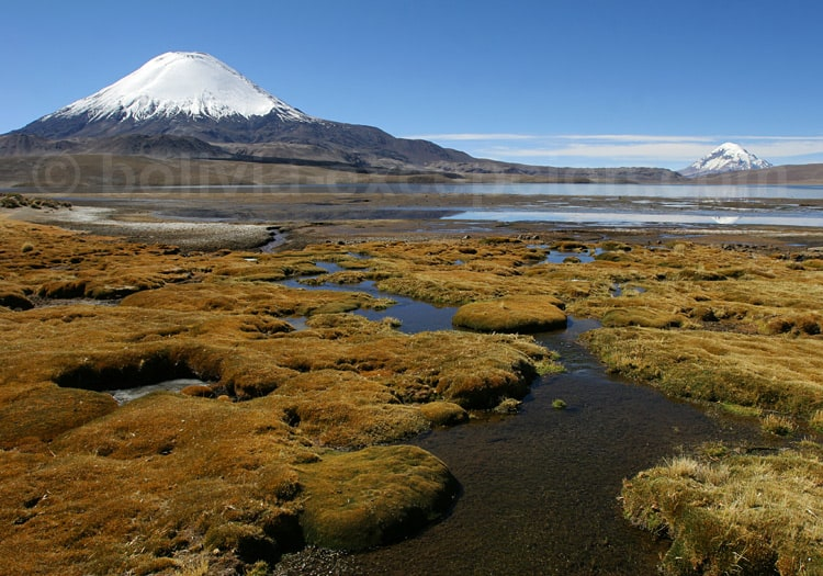 Excursion dans la parc Lauca, volcans Parinacota et Sajama
