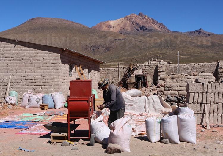 Mouture de la quinoa, village de Jirira