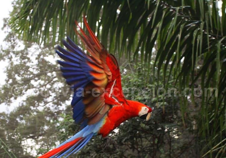 Envol depuis l'Amazonie bolivienne