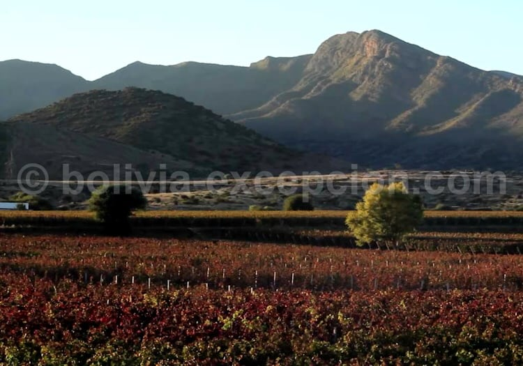Bodega Aranjuez, vallée centrale de Tarija
