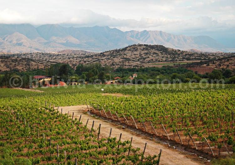 Bodega Kohlberg, vallée centrale de Tarija