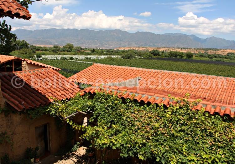Bodega Casa Vieja, Uriondo