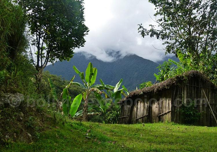 Cabane pahuichi à Los Yungas
