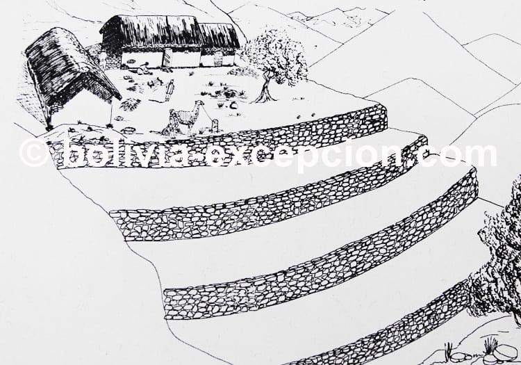 Culture en terrasses, civilisation Wari