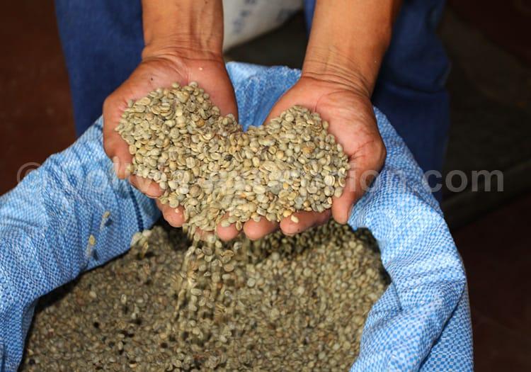 Production de café, Los Yungas