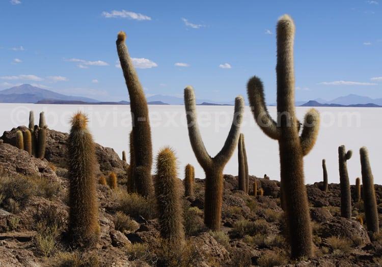Île Inca Huasi, salar d'Uyuni