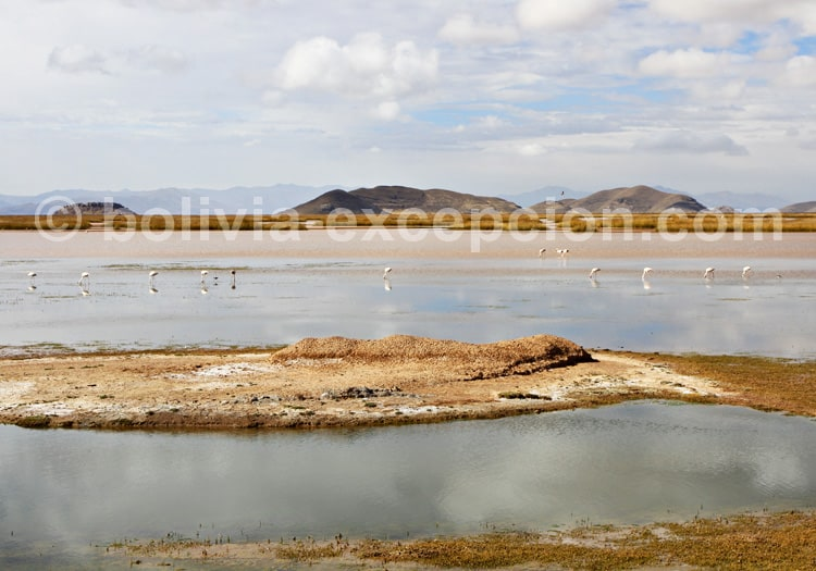 Lac Poopó, site Ramsar