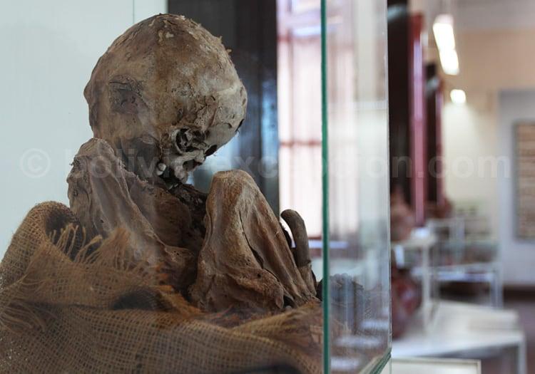 Musée national de paléontologie et d'archéologie de Tarija