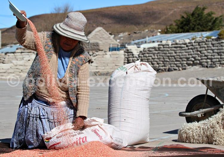 Nettoyage de la Quinoa, Jirira