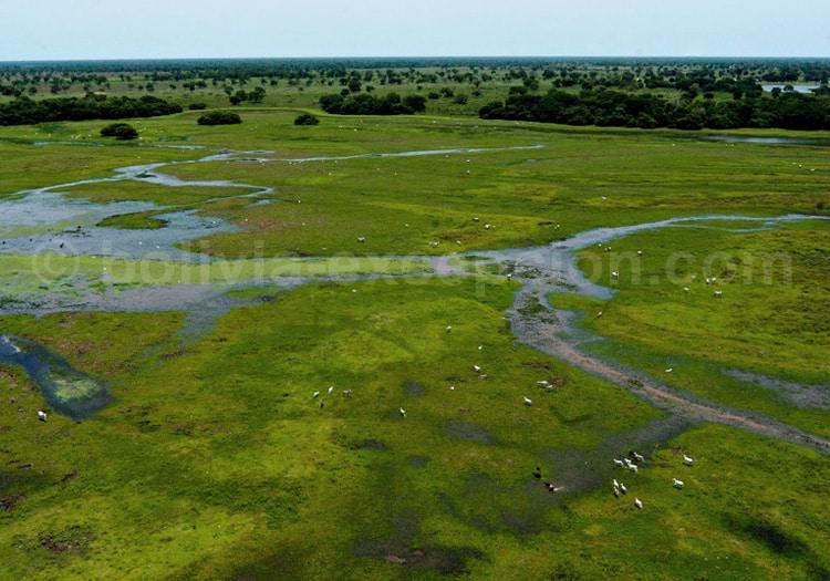 Pantanal bolivien, site Ramsar