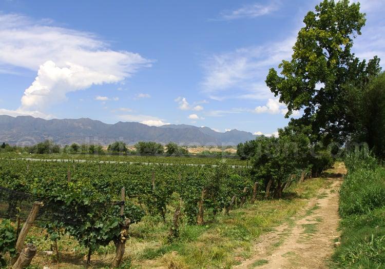 Route des vins, Bolivie