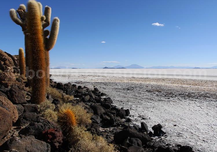 Uyuni, 40% des réserves mondiales de lithium