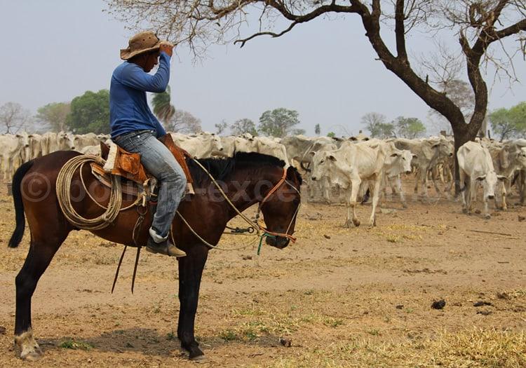 L'élevage en Bolivie