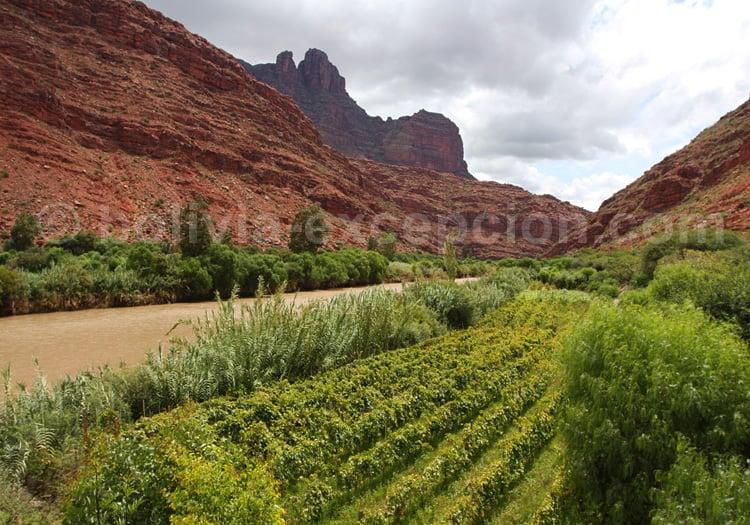 Vignobles de la vallée de Los Cintis, Bolivie