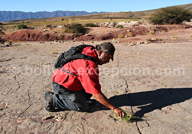 Empreintes de carnosaure, Carreras Pampas, Torotoro