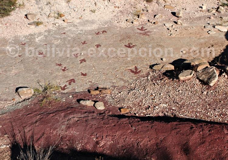 Traces de Coelurosaure, Torotoro, Bolivie