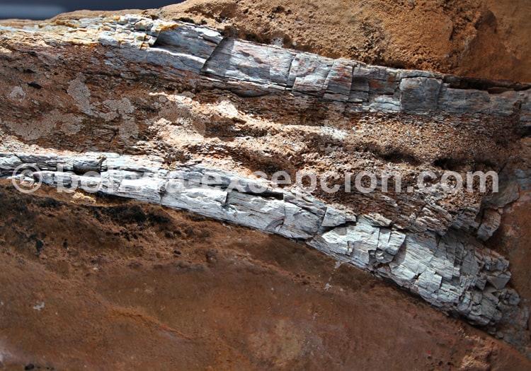 Fémur de Sauropode, Torotoro