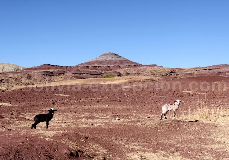 Paysages au Nord de Sucre