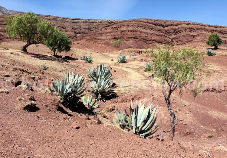 Végétation du cratère de Maragua, Bolivie