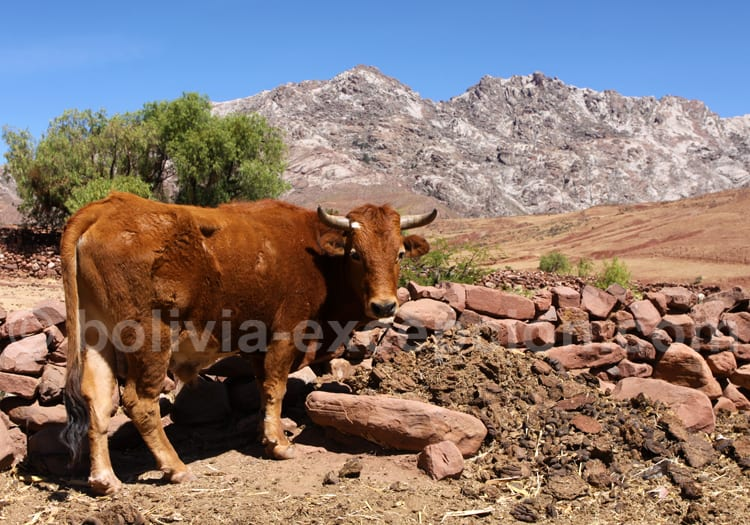 Un habitant de Maragua, Bolivie