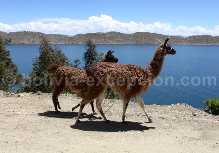 Voyage en Bolivie en Janvier