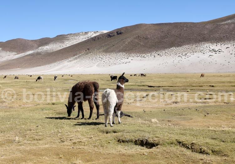 Voyage de 15 jours en Bolivie