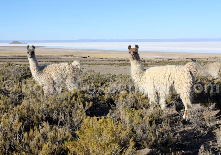 Salar Uyuni incontournable de Bolivie