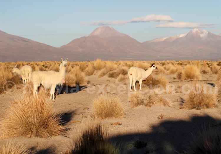Chipaya, Oruro