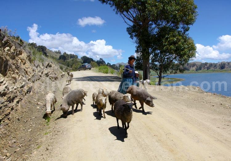 Travail agricole, Lac Titicaca