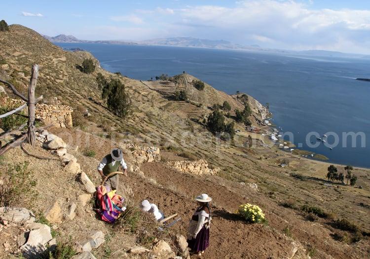Travail de la terre, Lac Titicaca