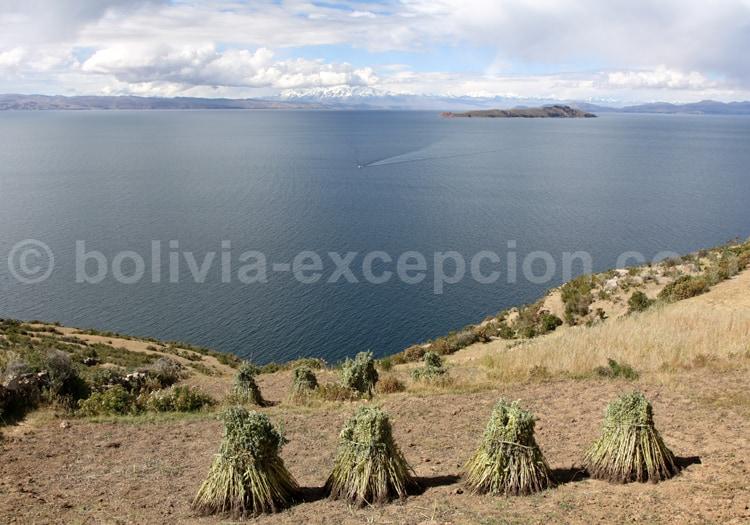 Récolte agricole, Lac Titicaca