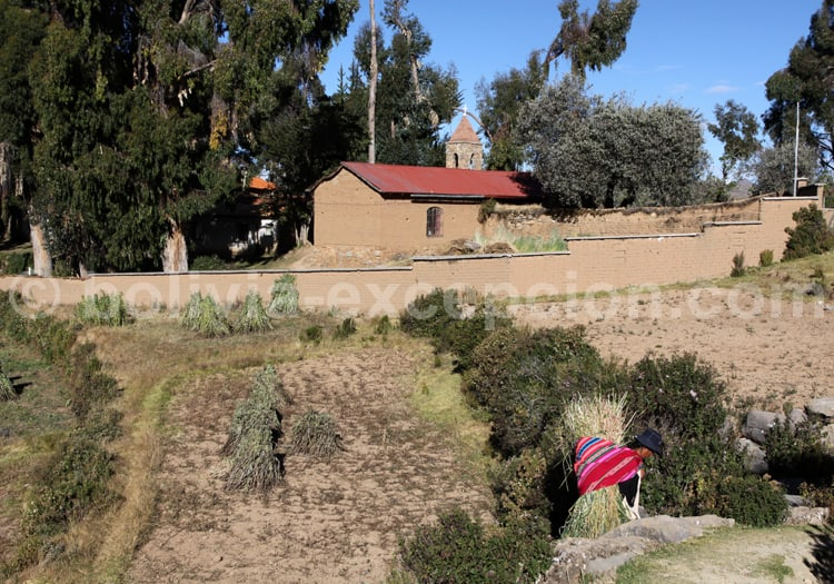 Agriculture, Yumani, Lac Titicaca
