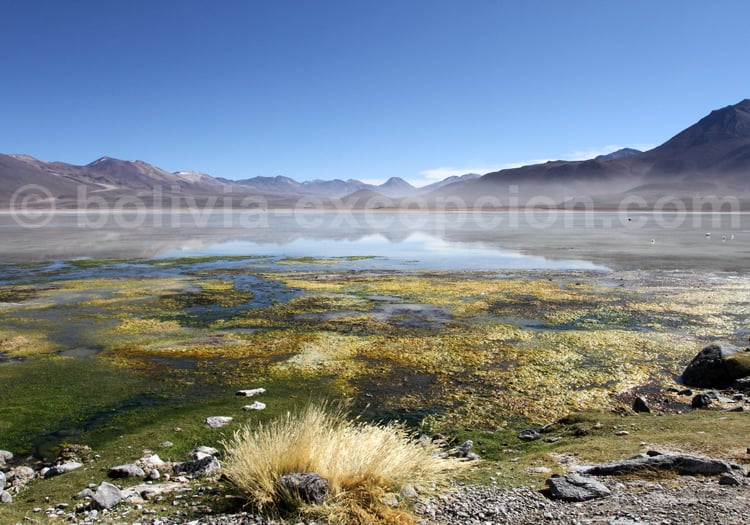Réserve nationale de faune andine Eduardo Avaroa