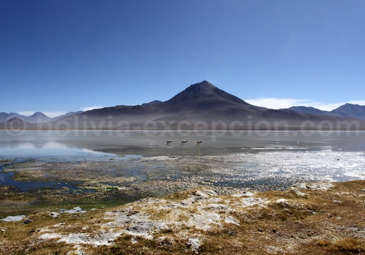 Sud Lipez, Potosi, Bolivie
