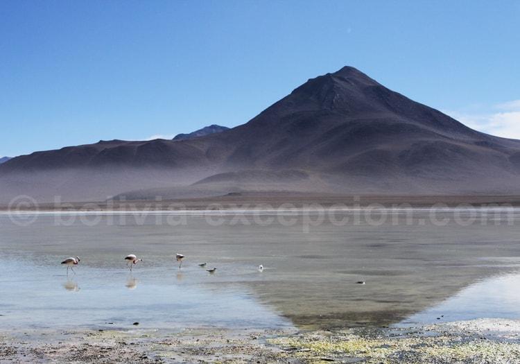 Lac salé, route des joyaux
