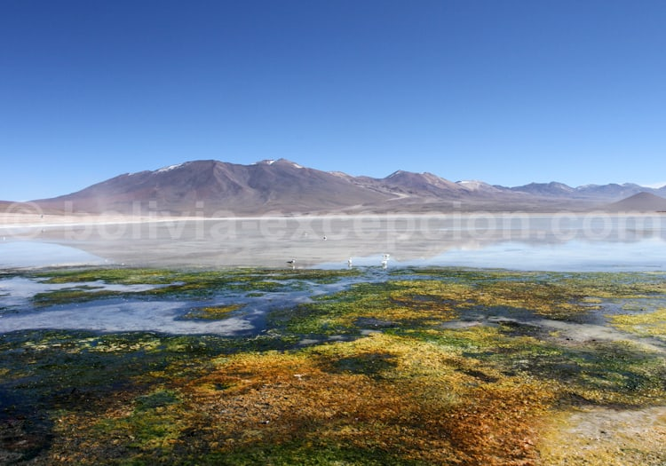 Laguna blanca, département de Potosi