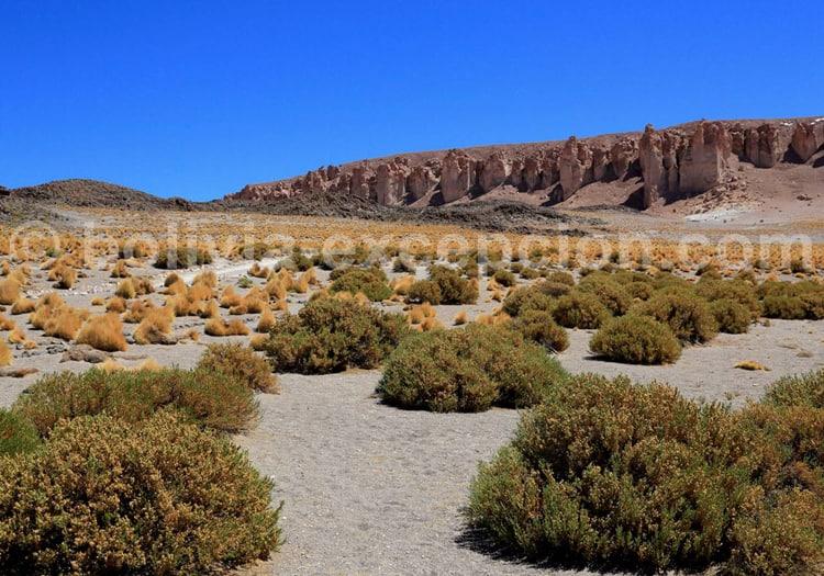 Paysage des hauts plateaux andins