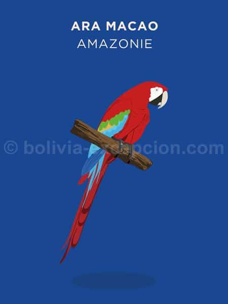 Ara Macao, Amazonie