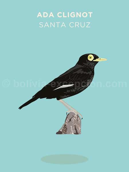 Ada Clignot, Santa Cruz
