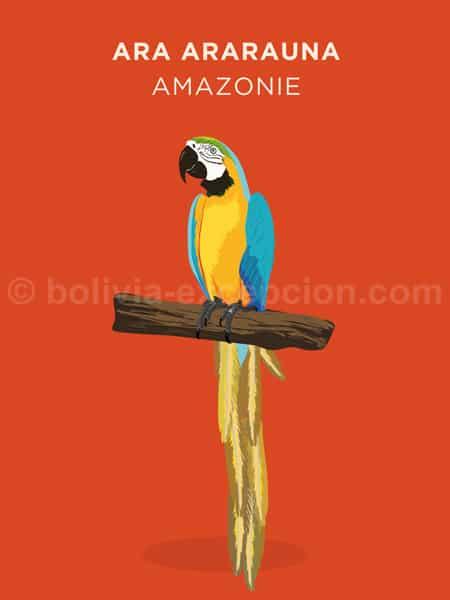 Ara Ararauna, Amazonie
