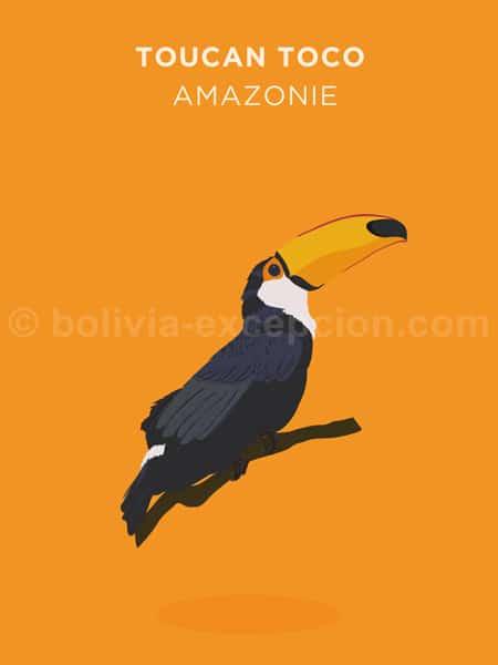 Toucan Toco, Amazonie