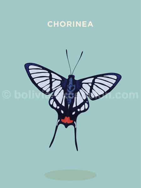 Chorinea